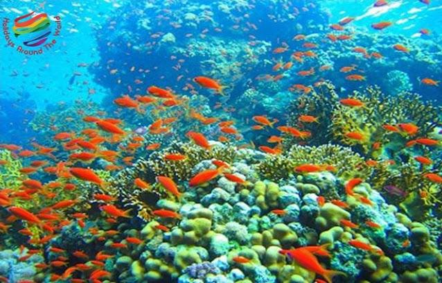 Coral Reefs Sharm El Sheikh