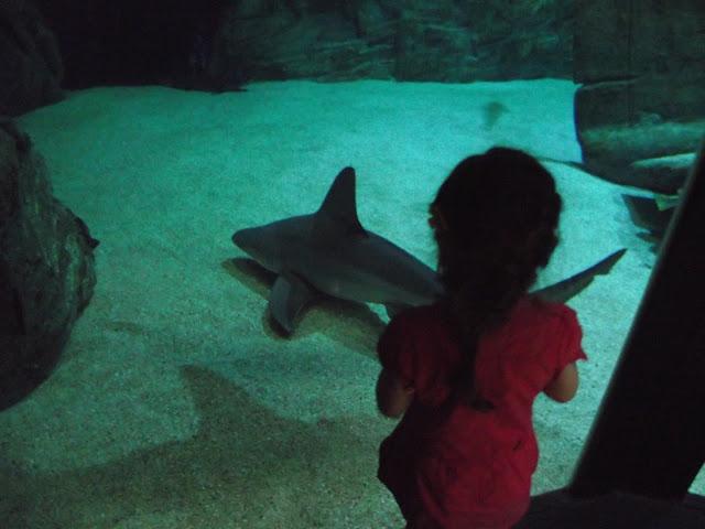 aquarium grau du roi