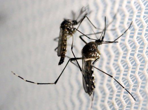 Kes Pertama Virus Zika Dikenalpasti Di Klang
