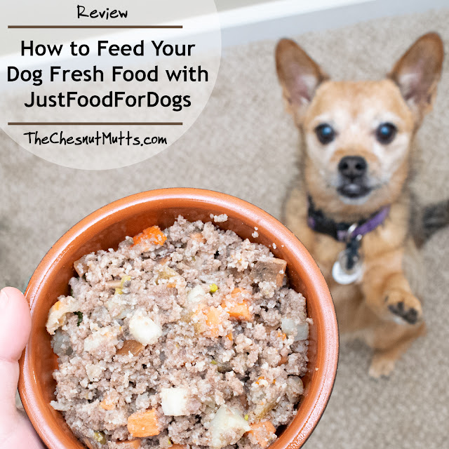 Review: How to Feed Your Dog Fresh Food with JustFoodForDogs