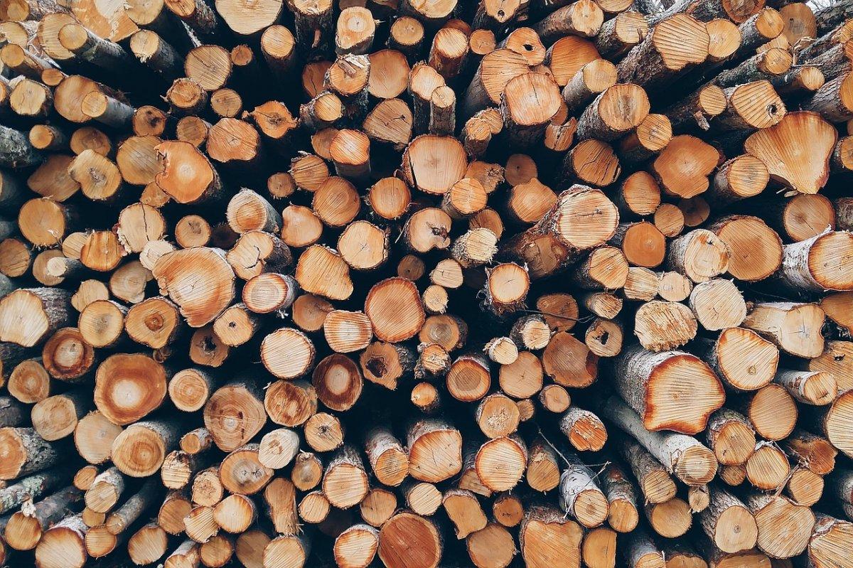 Cercetat pentru tăiere și sustragere de material lemnos