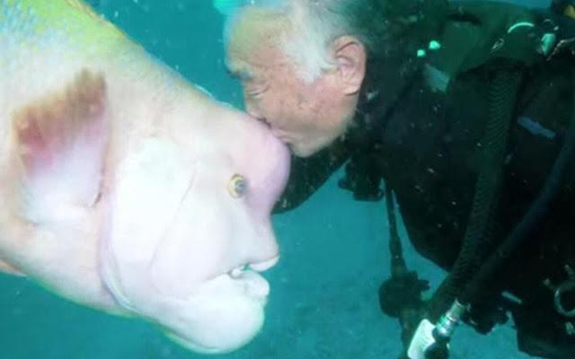 Мужчина более 30 лет дружит с рыбой, которую он выходил после ранения