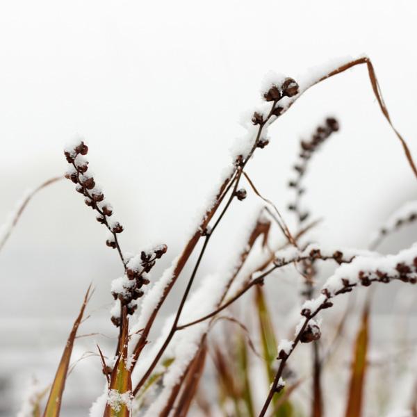 Winter, Moments, schneebedeckte Zweige