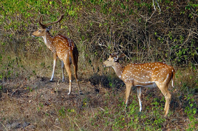 Best National Park in India, Pench National Park, Madhya Pradesh