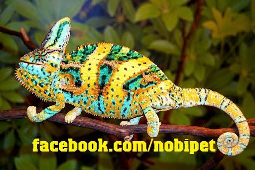 chameleon-reptile-tac-ke-hoa-doi-mau-tim-hieu-bo-sat-canh-dac-biet-1