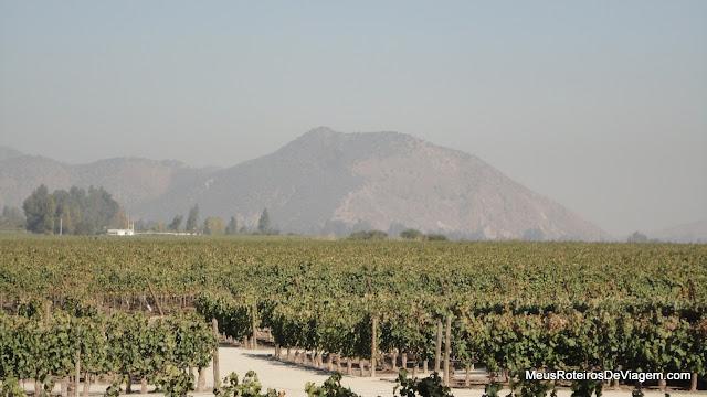 Vinhedos da vinícola Concha y Toro - Chile