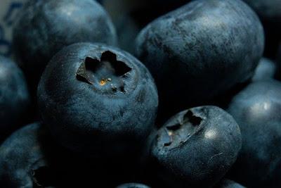 gambar buah bilberry