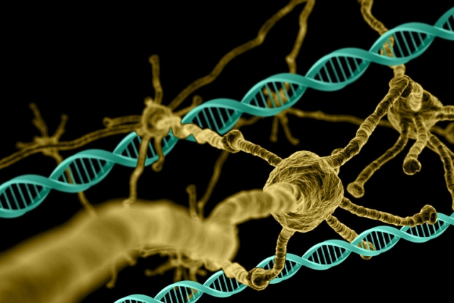 MIT neuroscientists identify hundreds of genes that are necessary for neuron survival