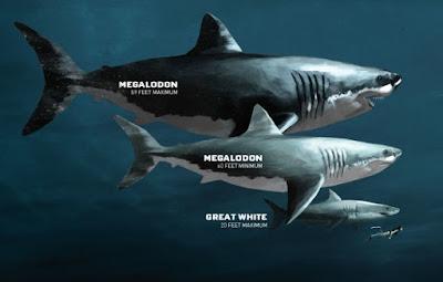 gambar ilustrasi ukuran besar hiu megalodon