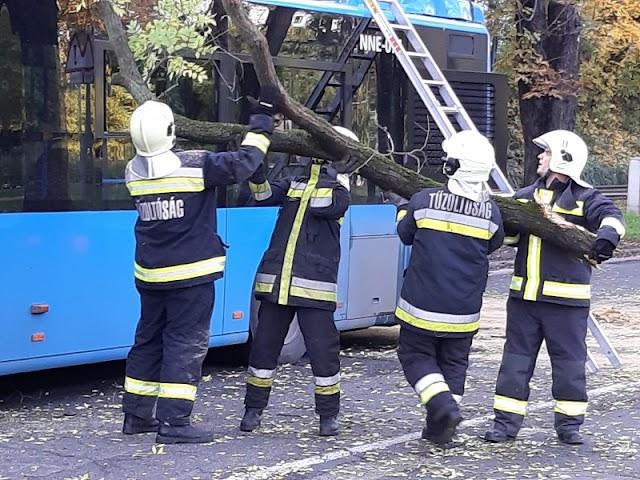 Kidöntött egy fát egy betonkeverő Budán, amely összetört egy buszt és két kocsit