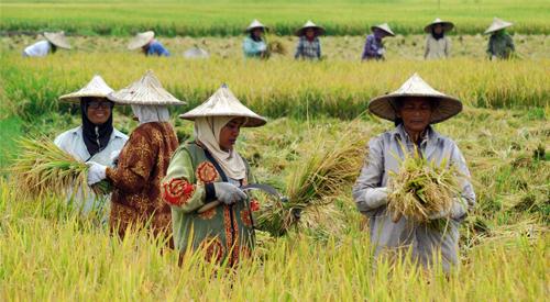 Kondisi Pertanian Di Indonesia Saat Ini Menurut Mahasiswa Pertanian