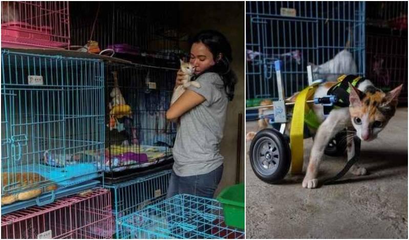 Ινδονησία: Γυναίκα φροντίζει σπίτι της 158 ανάπηρες γατούλες που βρήκε στους δρόμους (βίντεο)