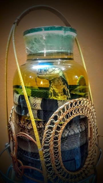 Bình rượu rắn tam xà 10 lit siêu đẹp