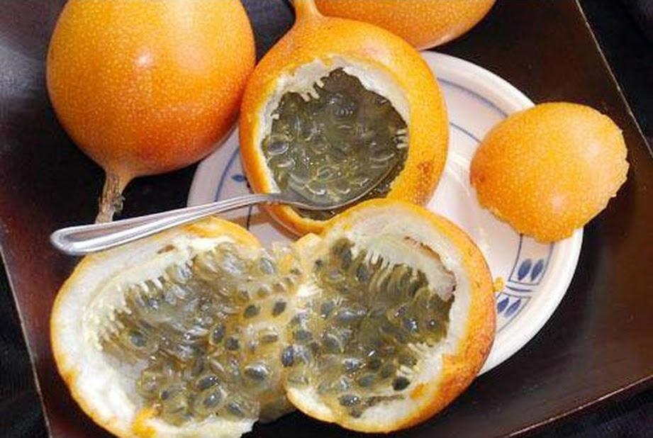Bibit Benih Biji Buah Markisa Oren Orange Passion Fruit Kaya Manfaat Isi 10 Biji Salatiga