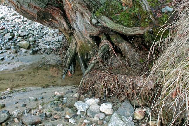 Inside a beavers dam - photo#36