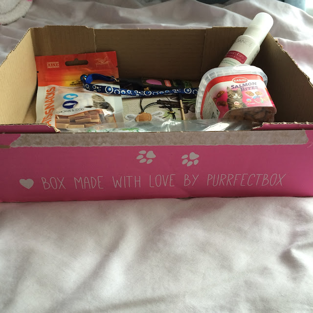 subscription box for cats review purrfect box