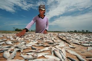 Cuaca Buruk, Pengrajin Ikan Asin Terancam Kolaps