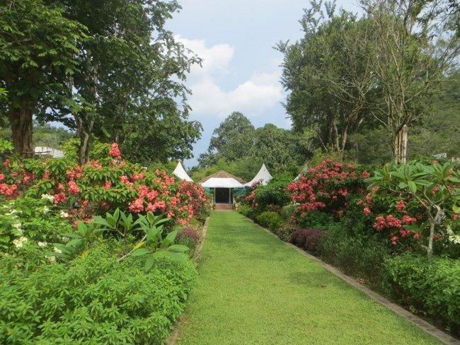 красивая аллея в саду