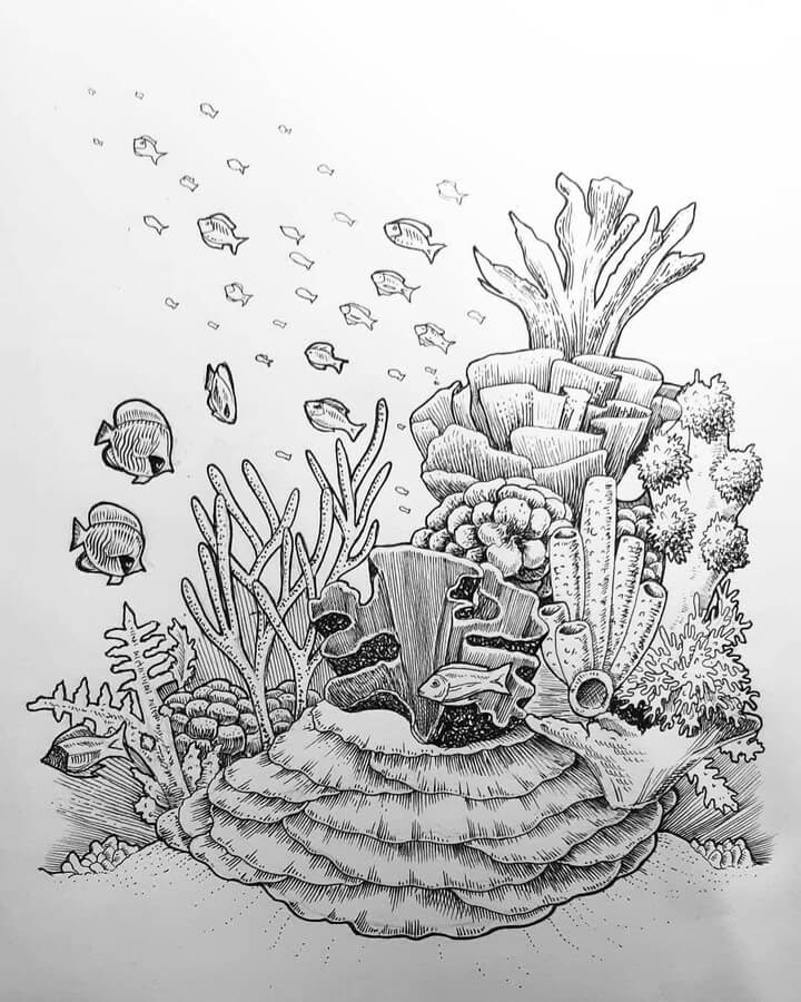 04-Coral-and-fish-Jonny-Seymour-www-designstack-co