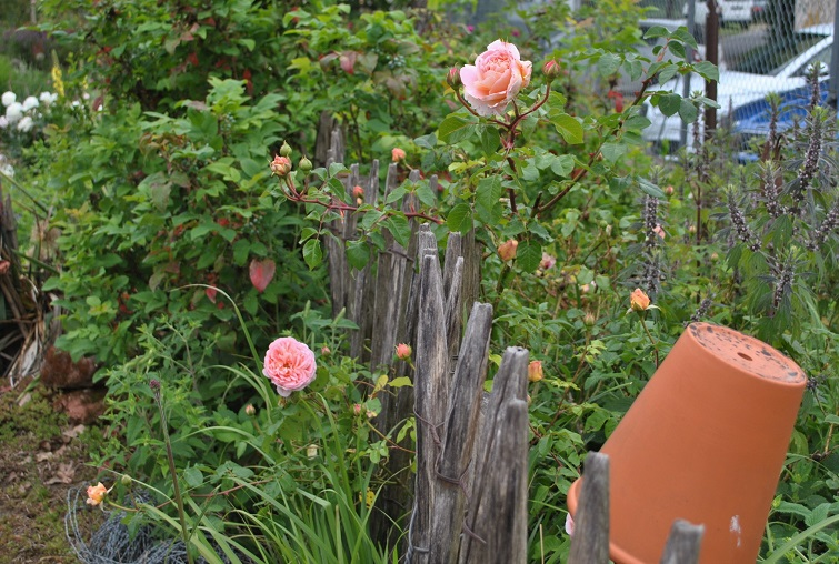 Passende Farben Terracotta und Lach Rosa