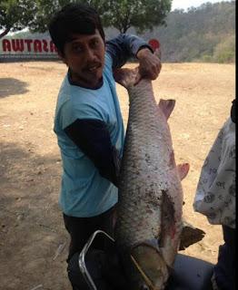 mancing ikan air tawar besar, mancing jogjakarta, kulon progo, waduk sermo