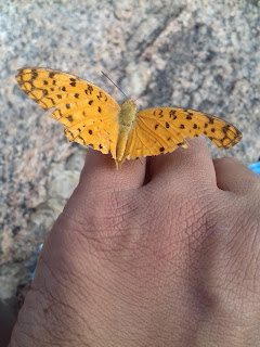 Butterfly upon little finger