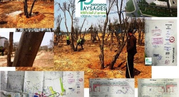 أكادير : اقتلاع أشجار الزيتون بأكادير يثير الجدل الواسع، و اجتماع طارئ يكشف عن المستور في الموضوع، والذي قد يصدم المتتبعين للشأن المحلي بالمدينة.