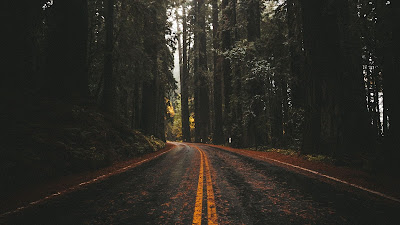 Wallpaper free road, asphalt, forest, trees, nature