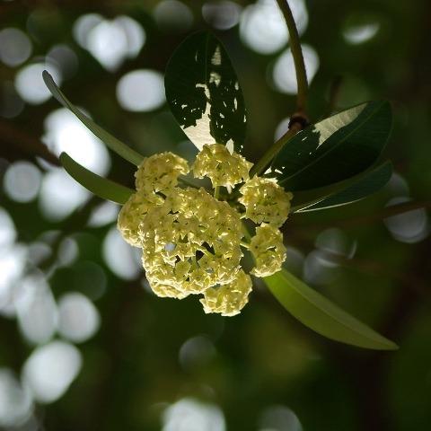 Chùm & Bài Thơ Mùa Thu Lá Vàng Rơi Đẹp Dịu Dàng, Nổi Nhớ & Cô Đơn