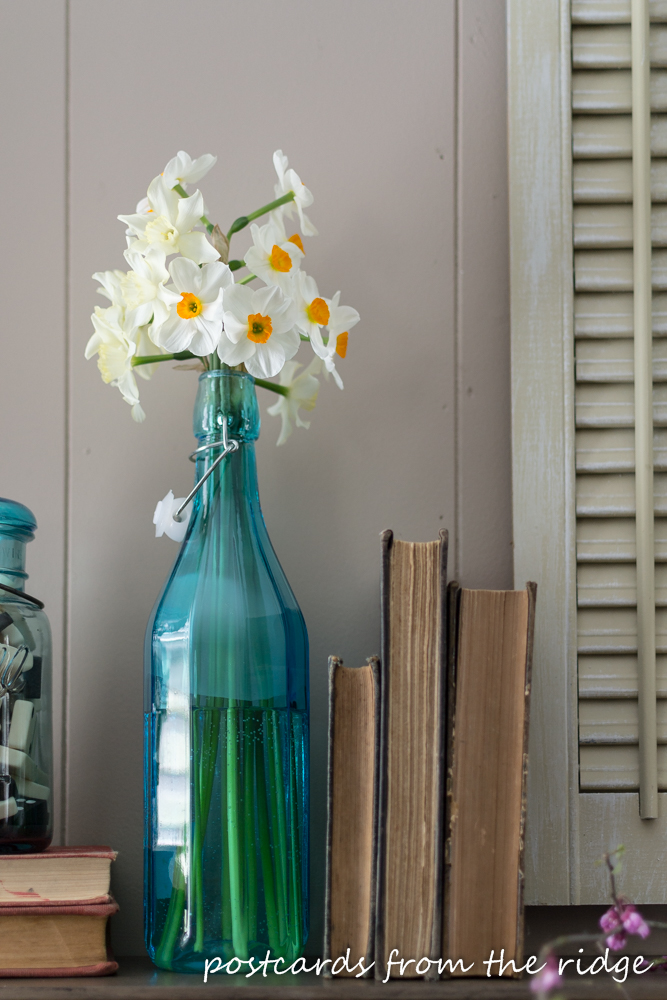 daffodils in a blue bottle