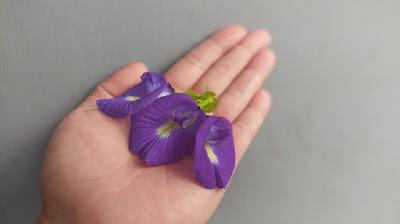 Manfaat bunga telang