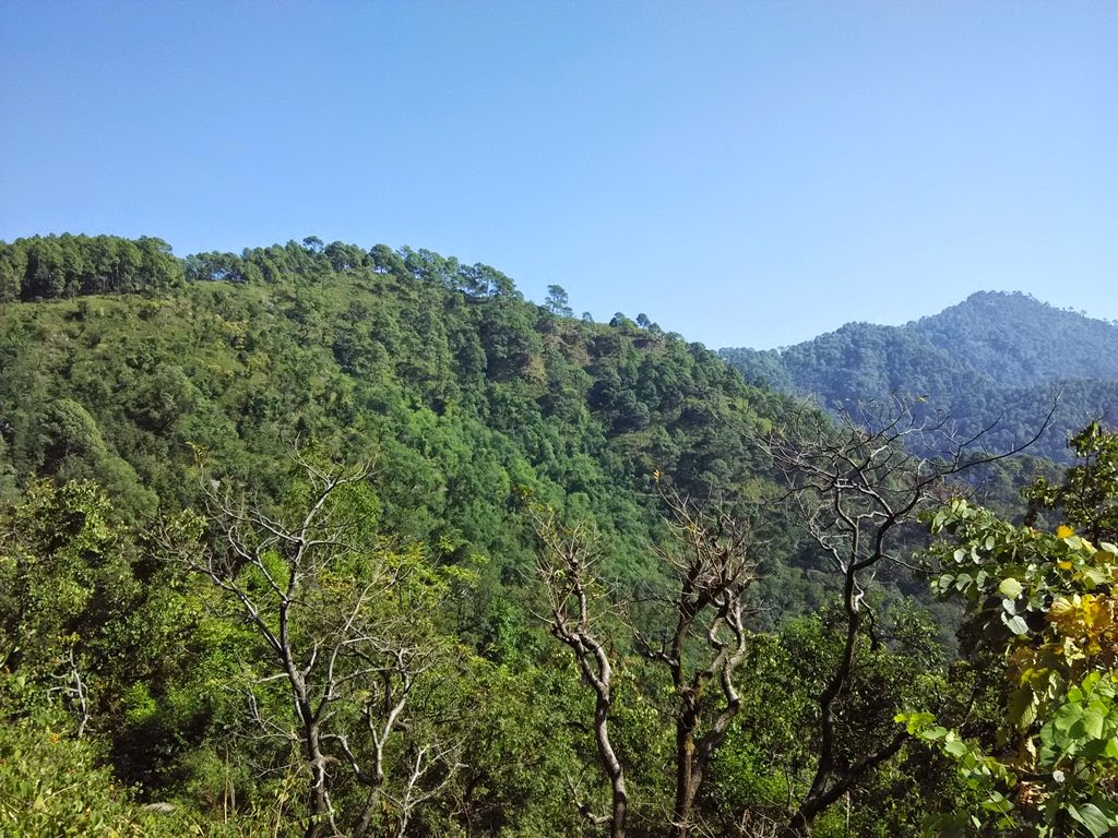sattal forest