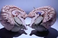 beynin neresiyle bir insanı hatırlarız