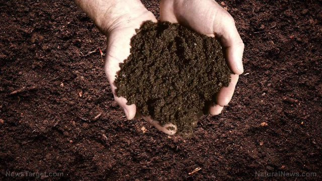 Soil Metals Linked With Cancer Mortality