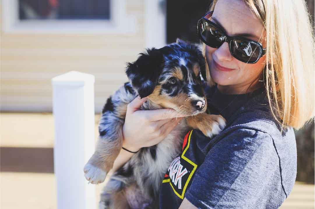 chien hypoallergénique, hypoallergène, le chien berger australien, race de chien, animal de compagnie, chien de compagnie, races de chiens, chiot, aussies, berger américain miniature, chien de chasse, animaux de compagnie, animaux domestiques, chien de garde