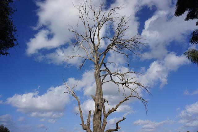 עץ בפארק יקום