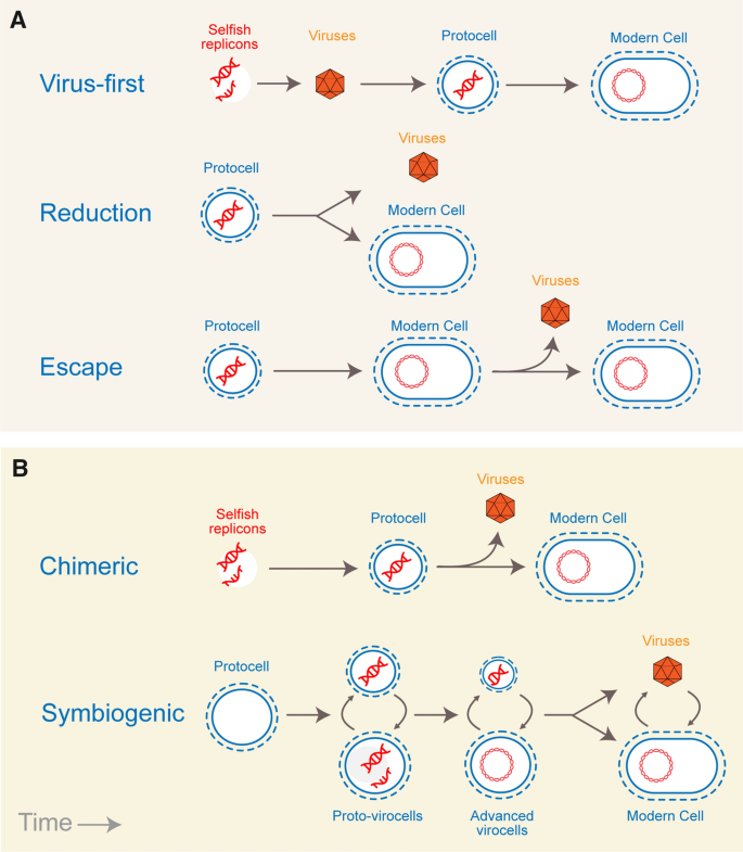 The origin and evolution of viruses inferred from fold family structure
