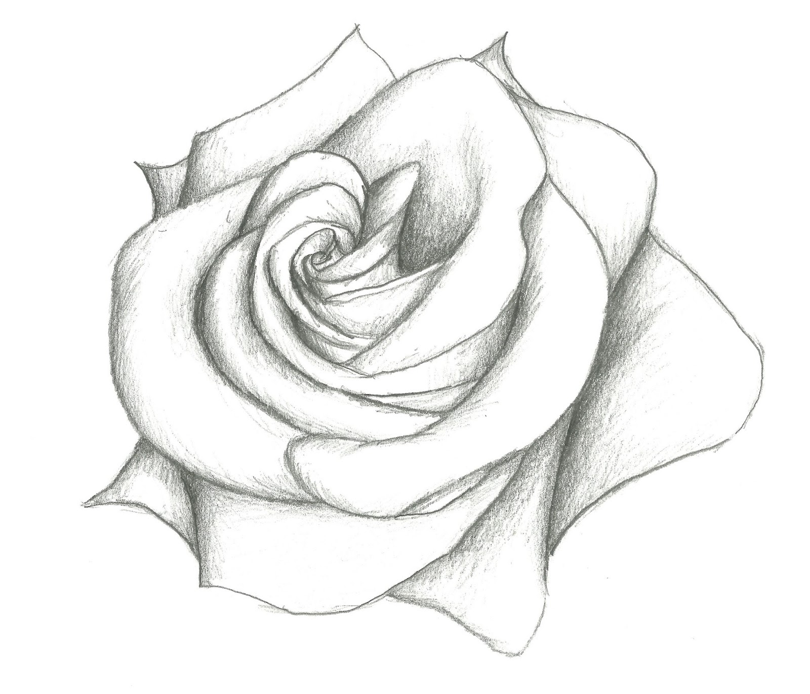 Rose Drawing In Pencil | Auto Design Tech