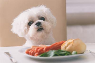 Esistono alimenti che i cani non possono mangiare