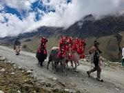 Llamas Cargueras: Recorrieron la región Pasco, por las rutas del Qhapaq Ñan con la Cápsula del Tiempo por el Bicentenario del Perú