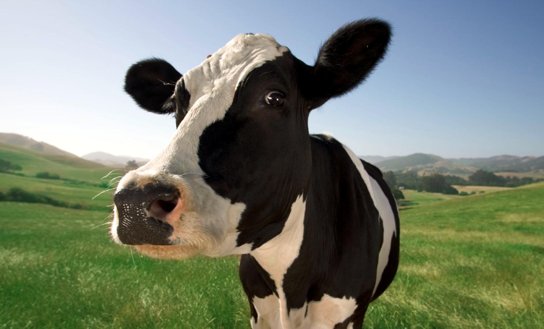 Shane Shirley : Is Organic Milk Better Than Regular Milk?