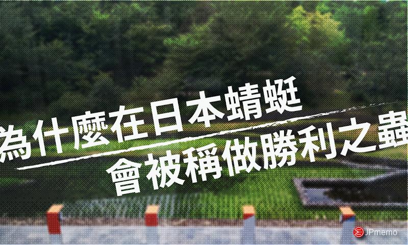 在日本有勝利蟲之稱的蜻蜓