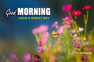 Good morning greetings messages