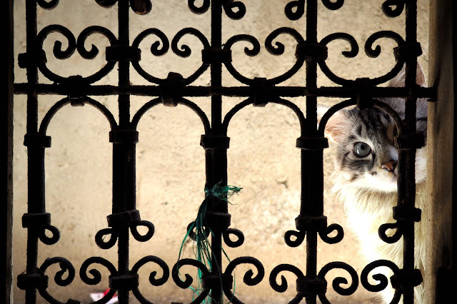 cat through window in Marrakech Photo Diary