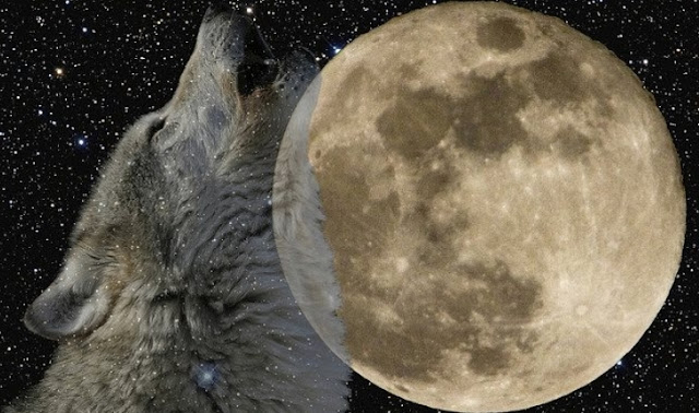 Full January wolf moon will be shining in the sky this week