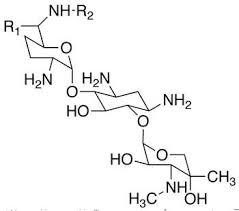 Gentamicin injection BP: A bactericidal Amino glycoside antibiotic