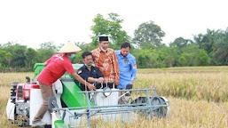 Ikut Panen di Seluma, Menteri Pertanian RI Pastikan Bengkulu Jadi Lumbung Padi Nasional