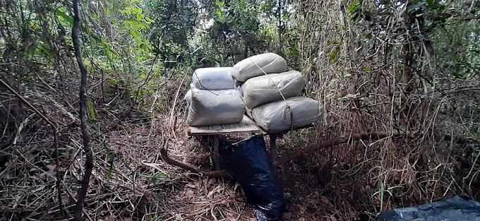 Meia tonelada de maconha é encontrada no Recôncavo baiano