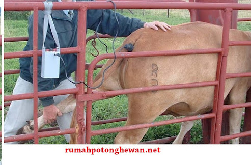 jual cattle immobilizer
