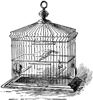 Bilgrimage: Droppings from the Catholic Birdcage